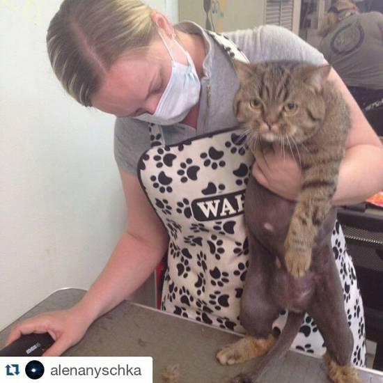 Как в домашних условиях подстричь кота