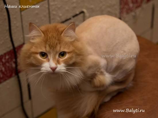 можно ли кошке делать клизму при запоре в домашних условиях