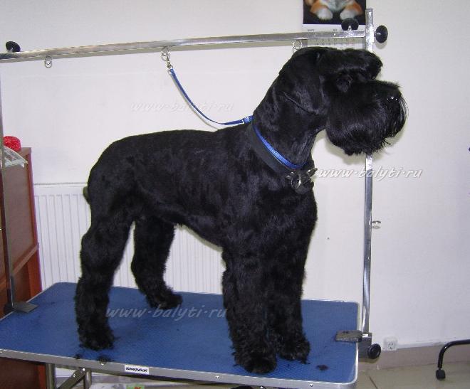 Марти шнауцер - полный комплекс для жесткошерстных собак породы ризеншнауцер: Тримминг,вычесывание колтунов,мытье,стрижка,когти,чистка ушей,глаз