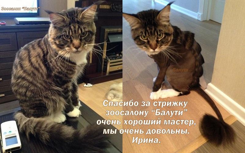 Стрижки для котов отзывы
