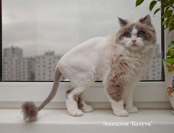 Салон подстричь кота